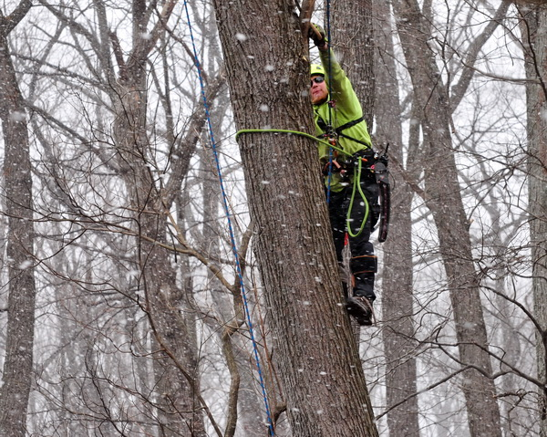 tree removal services in winter