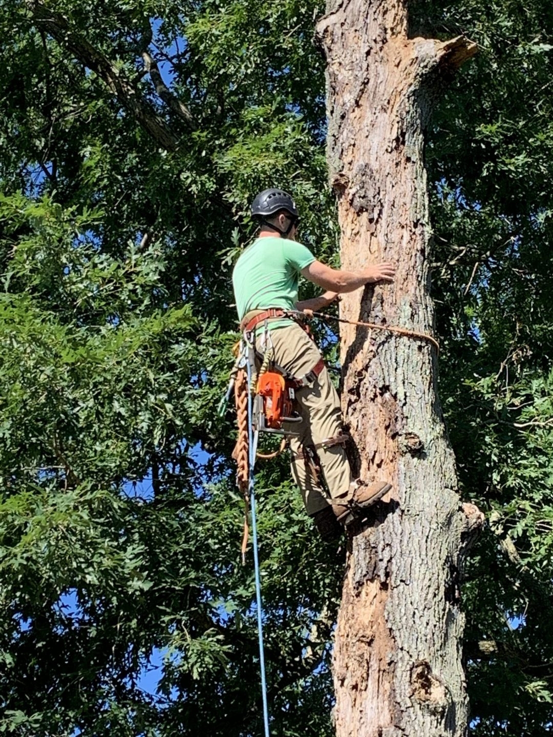 guy performing tree care services